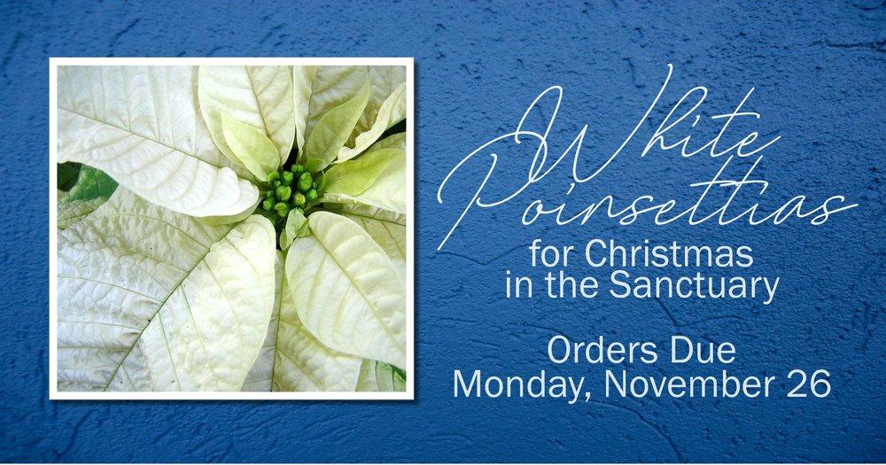 Sanctuary Flowers facebook link 111818.jpg