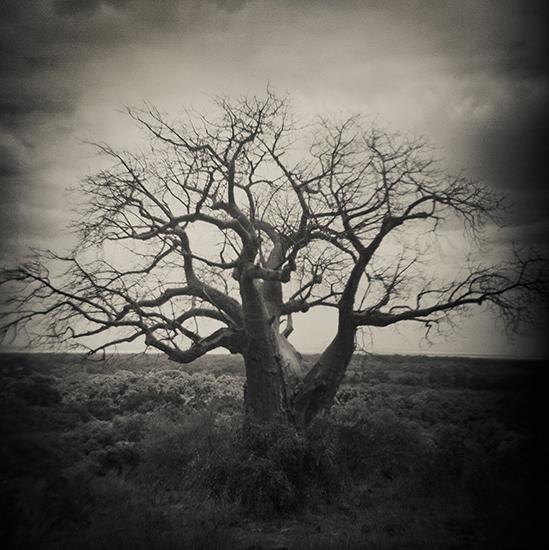 tree 12x12.jpg