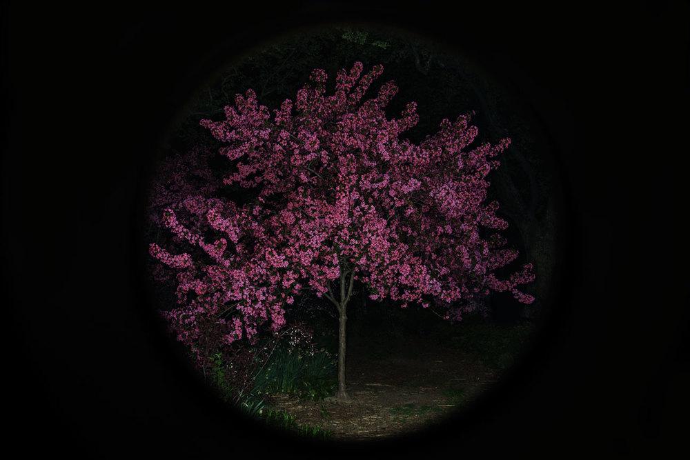 spring_bloom.jpg
