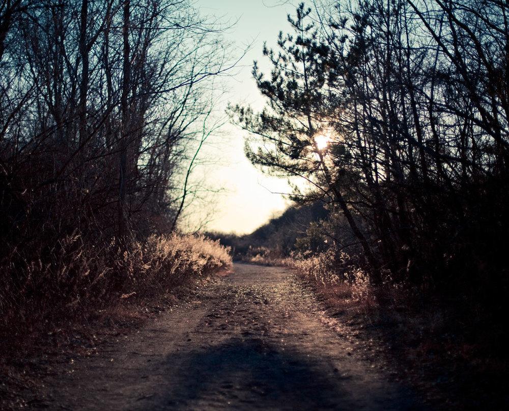 path_tilden.jpg