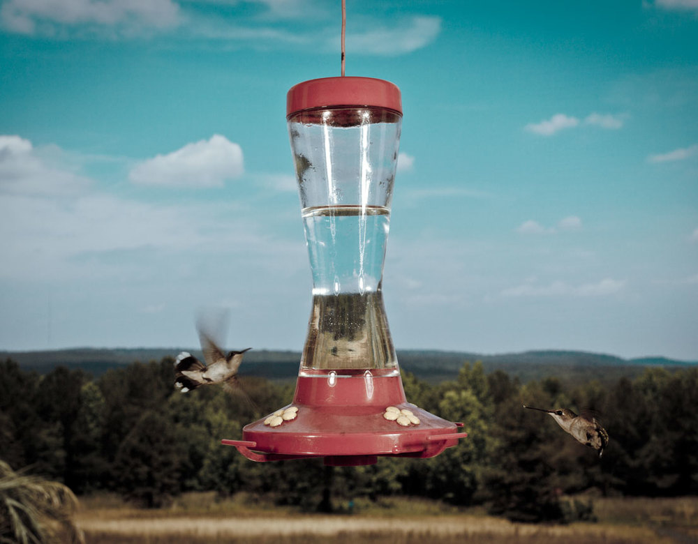 bird_feeder.jpg