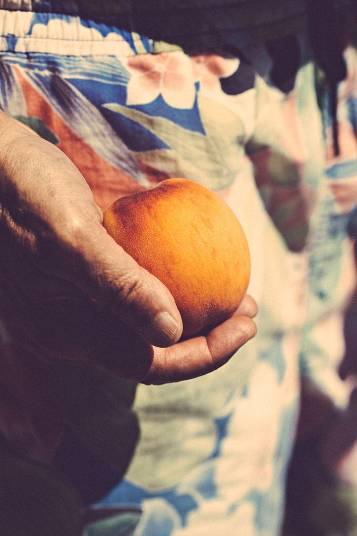 peach-(1-of-1).jpg