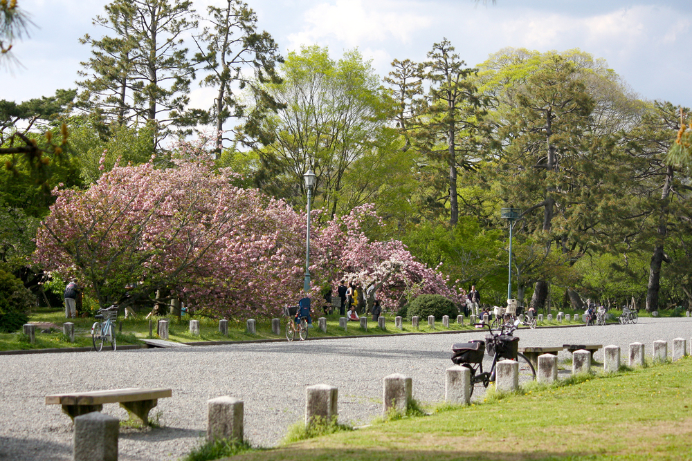 Cherry Blossom in Kyoto Imperial Palace Park, Kyoto
