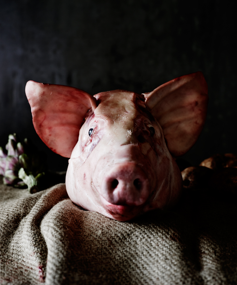 upg pig head photoshoot melissa collison.jpg