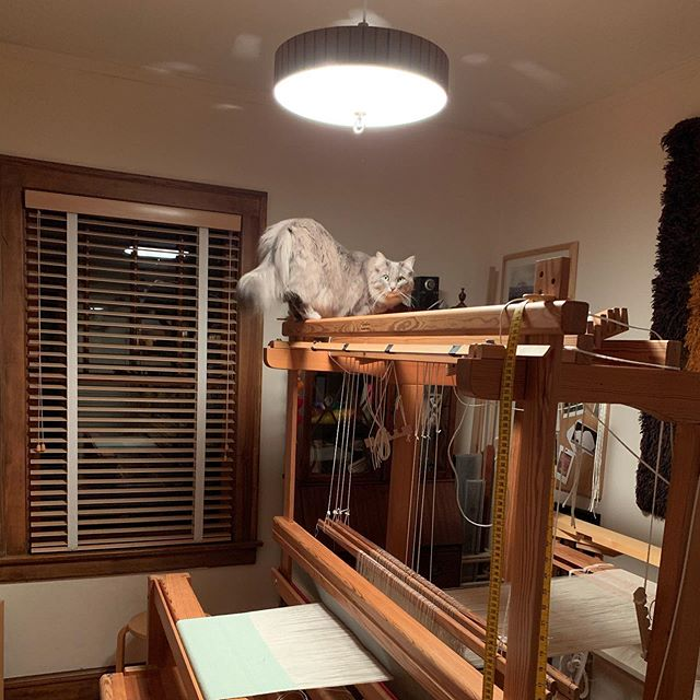 Once one figures out how to climb it… [Image of a grey longhair cat balancing near a light fixture on the top frame of a 6-foot high floor loom and image of a large brown tabby on the same loom]  #catsandweaving