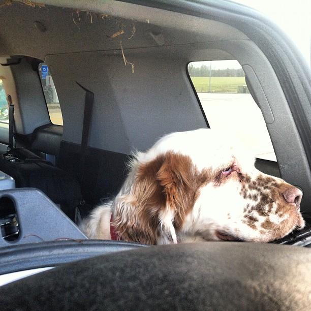 Road Hound (Taken with  instagram )