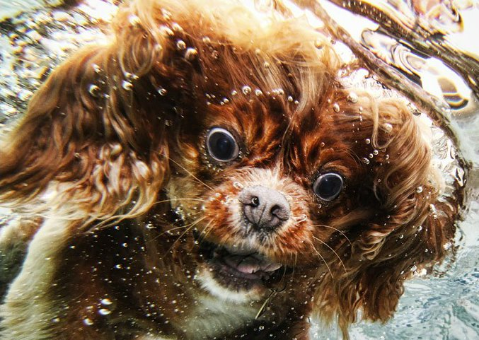 photojojo: Underwater dog photography by Seth Casteel. I mean, what's not to love?