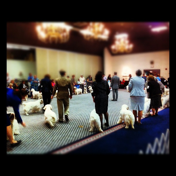 A ballroom full of sheep (Taken with  Instagram  at Y O Ranch Resort Hotel)