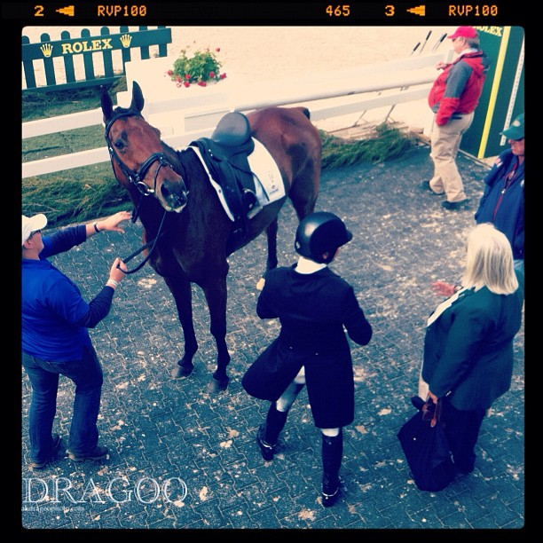 Phillip Dutton does dressage in a Charles Owen. #rk3de  (Taken with  instagram )