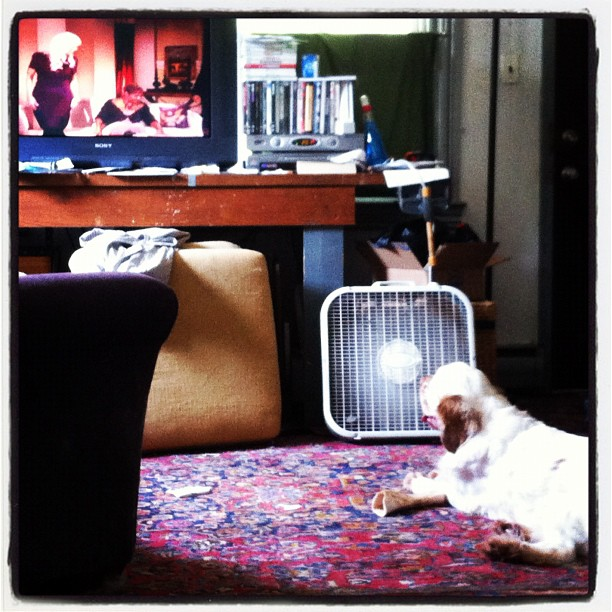 Boozie misses the #RHODC (Taken with  Instagram )