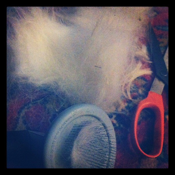 Holiday weekend. I grooming the spaniels. I have hair up my nose.  (Taken with  Instagram )