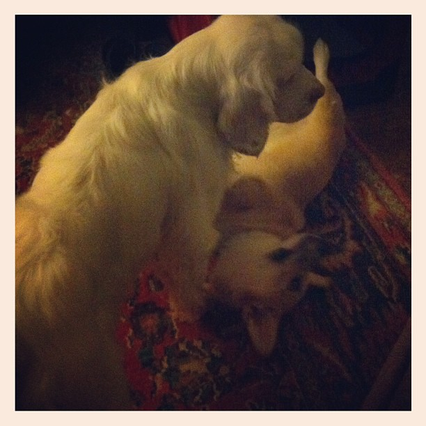 Teaching the puppy her place on the totem pole. (Taken with Instagram)