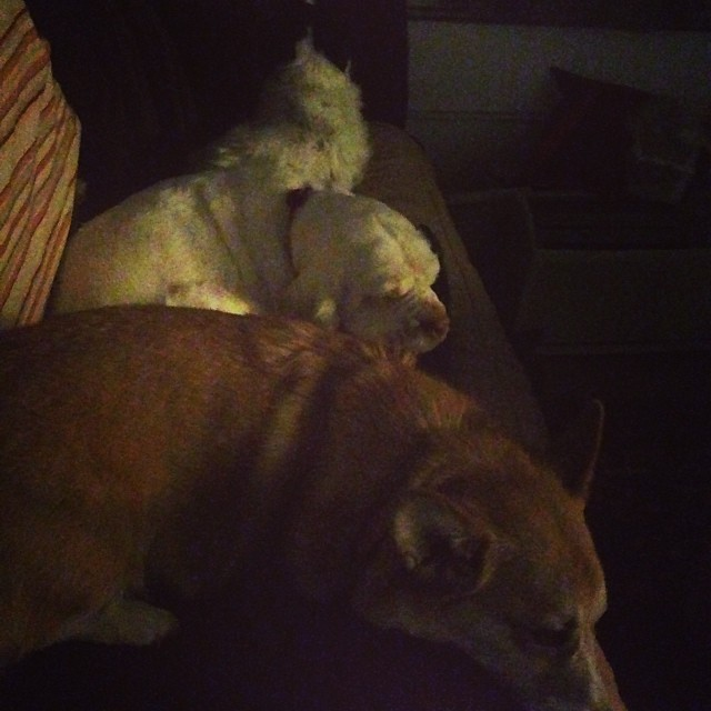 My hot Saturday night with the lap dogs.