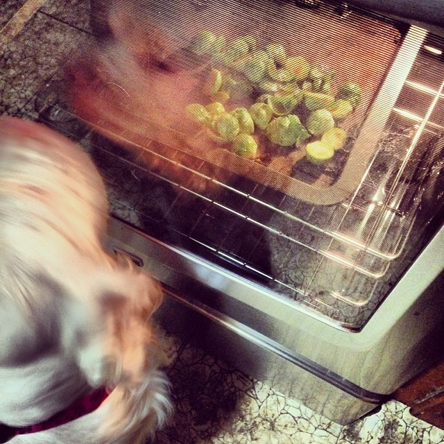 What's in the oven? #sproutsnsriracha #cookingwithclumbers
