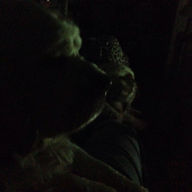 Blackout. Clumbers are on my lap. Guarding or scary cats? #livingwithclumbers