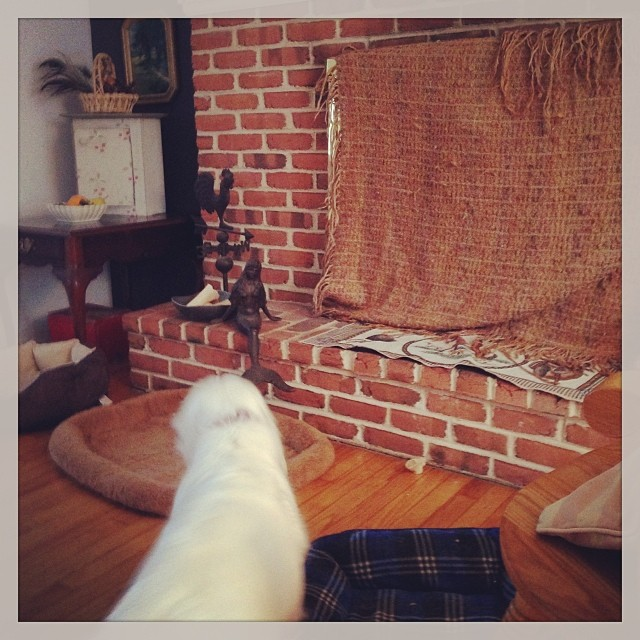 Jill has to hide the fireplace. Toonie thought there was another dog on the other side of the glass. #livingwithclumbers