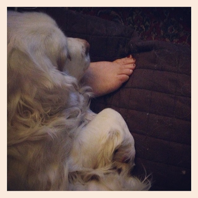 Jagger very rarely joins me on the couch. He must have needed something tonight. #livingwithclumbers