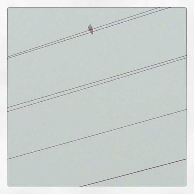 Bird+snow+wires. #grabshot