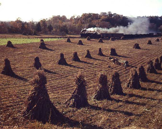 NW47KC Train 202 Passes Stacked Corn Stalks, Watauga, VA, 1956  16 x 20 inches chromogenic dye coupler print