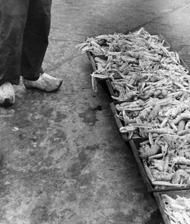 Fred Stein Fish Market, Brittany, France, 1935  8.25 x 8 inches vintage silver print