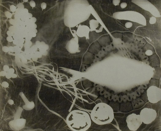 Leslie Gill Rest for the Stomach, 1935  16 x 20 inches vintage photogram