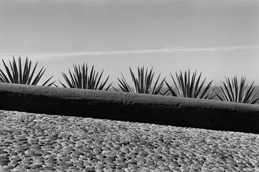 El Tamarindo, Jalisco, 2006  16 x 20 inches edition of 25 silver print