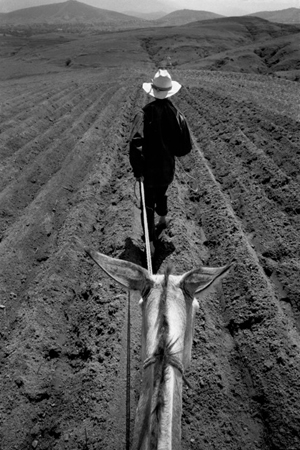 Near Tiracos, Oaxaca, 2004  16 x 20 inches edition of 25 silver print