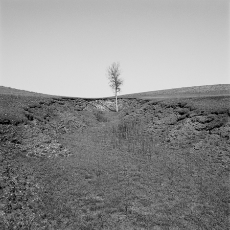 Cottonwood Tree, Flint Hills, 2006 Negative #W10_5_06 from the series  West and West   24 x 24 inches edition of 5 carbon pigment print