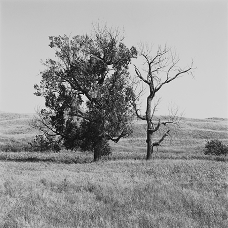 Cottonwood Trees, High Plains, 2005 Negative #W14_10_05 from the series  West and West   24 x 24 inches edition of 5 carbon pigment print
