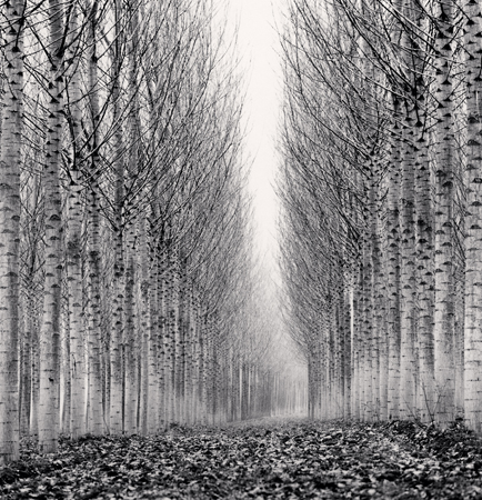 Michael Kenna Corridor of Leaves, Guastalla, Emilia Romagna, Italy, 2006  8 x 7.75 inches edition of 45 toned silver print