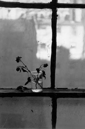 Dead Flowers in Glass on Back Window, 77 East 10th Street, NYC, 1952  13 x 8.125 inches vintage silver print