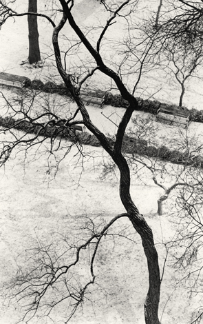 Homage to Kertesz, Gramercy Park, New York, 2003 9.5 x 6 inches edition of 45 toned silver print