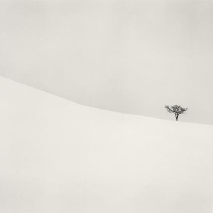 Single Tree, Mita, Hokkaido, Japan, 2007 7.75 x 7.75 inches edition of 45 toned silver print
