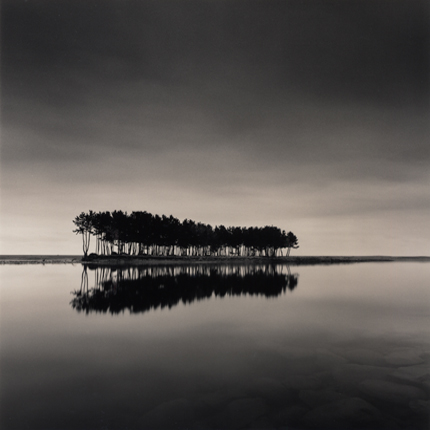 Pine Trees, Wolcheon, Gangwando, South Korea, 2007 7.75 x 8.25 inches edition of 45 toned silver print