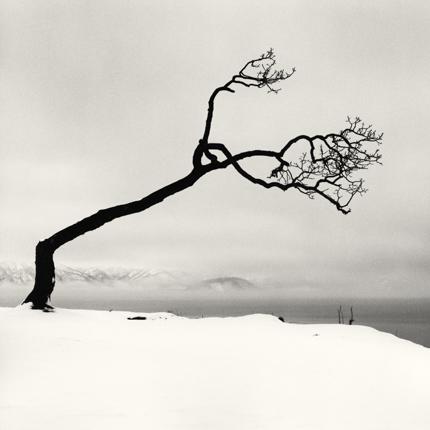 Kussharo Lake Tree, Study 7, Kotan, Hokkaido, 2007 7.75 x 7.75 inches edition of 45 toned silver print