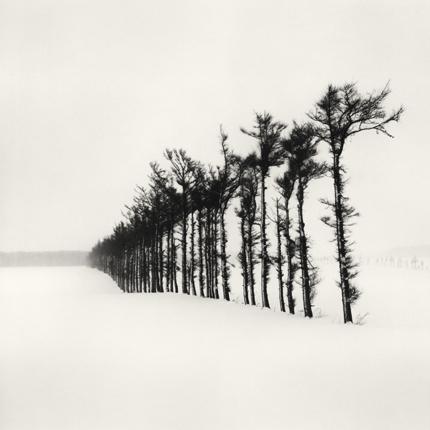 Tree Line, Hamakoshimizu, Hokkaido, Japan, 2007 7.75 x 7.75 inches edition of 45 toned silver print