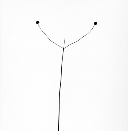Harry Callahan Weed Against the Sky, Detroit, 1948 7 x 5.5 inches silver print