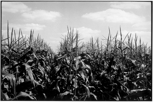 MD74420-11, 1975 from the series  Midwest Diary  11 x 14 inches vintage silver print