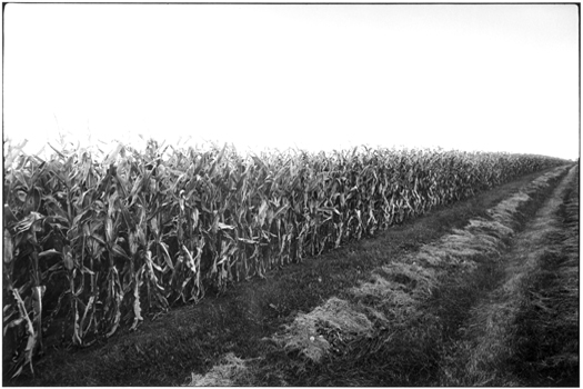 MD447-33, 1974 from the series  Midwest Diary  11 x 14 inches vintage silver print