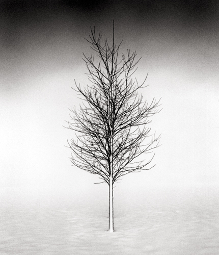 Tree Portrait #1, Wakoto, Hokkaido, Japan, 2002 7.25 x 8.5 inches edition of 45 toned silver print