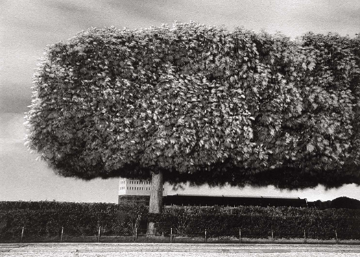 Windy Trees, Paris, France, 1984 6 x 9 inches edition of 45 toned silver print