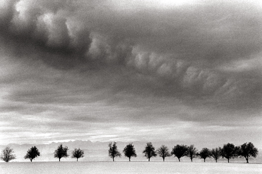Fourteen Trees, Marbach, Austria, 1999 6.25 x 9.25 inches edition of 45 toned silver print