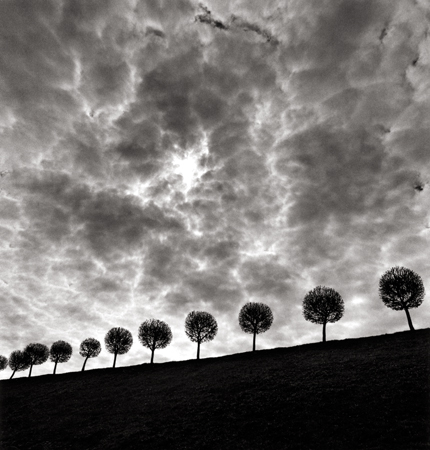 Ten and a Half Trees, Peterhof, Russia, 2000 7.5 x 7.5 inches edition of 45 toned silver print