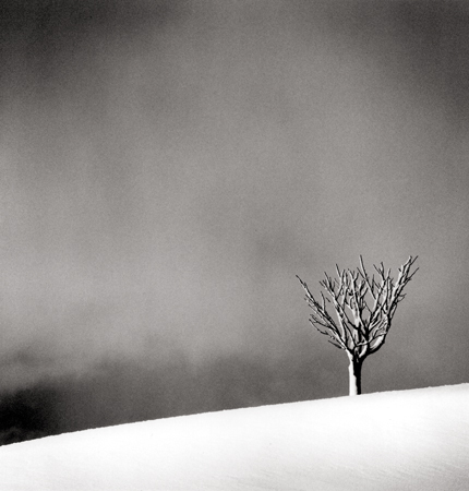 Snowfall, Numakawa, Hokkaido, Japan, 2004 8 x 7.5 inches edition of 45 toned silver print