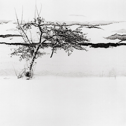 Berries and Falling Snow, Furano, Hokkaido, Japan, 2004 7.5 x 8 inches edition of 45 toned silver print