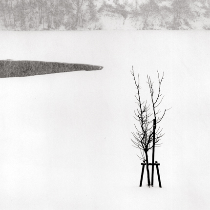 Sapling in Snow, Bifuka, Hokkaido, Japan, 2004 7.5 x 8 inches edition of 45 toned silver print
