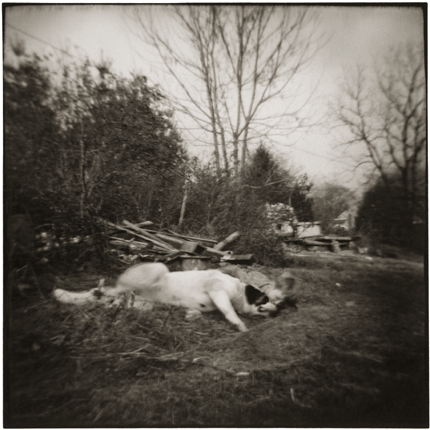 Boy and St. Bernard, Shawnee, Ohio, 1974 10 x 8 inches vintage silver print
