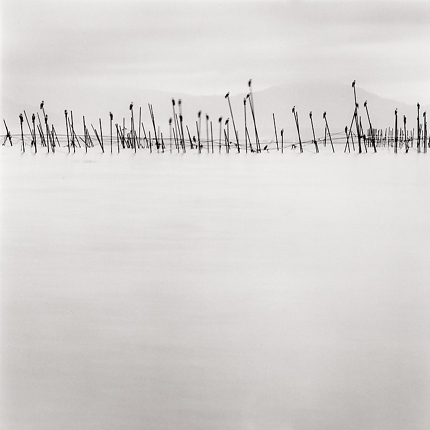 Birds on Poles, Lake Biwa, Honshu, Japan, 2001 7.75 x 7.5 inches edition of 45 toned silver print
