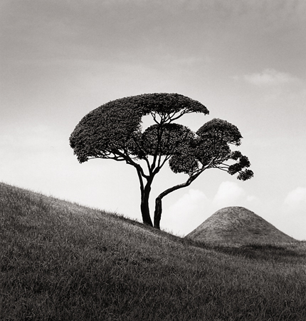 Tree and Mountain, Suizenji Joju-en Garden, Kumamoto, Kyoto, Japan, 2002 7.5 x 7.5 inches edition of 45 toned silver print