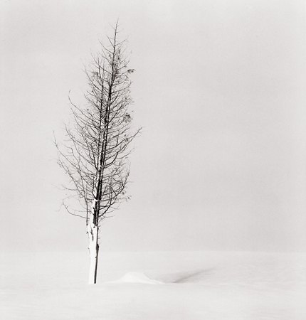 Tree Portrait, Study #2, Wakoto, Hokkaido, Japan, 2002 7.5 x 8 inches edition of 45 toned silver print